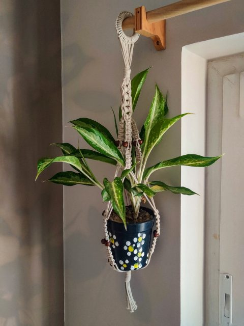 Carla Macrame Plant Hanger with One Free Pot