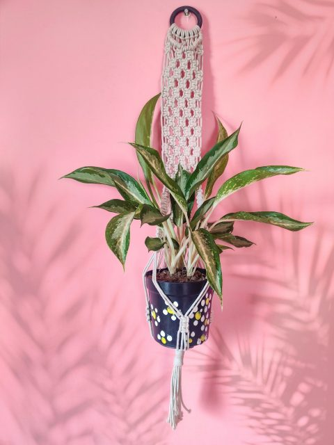Wendy Macrame Plant Hanger with One Free Pot