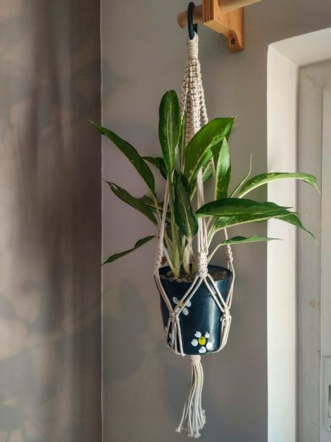 Fanny Macrame Plant Hanger with One Free Pot